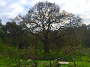 The Oak Tree & The Purpose Project